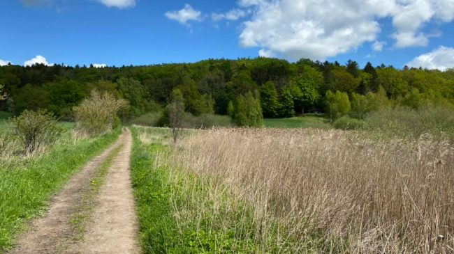 Fra Tennisskoven til Buresø og retur – 20 kilometer i Egedals skønne natur.