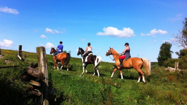 Lej heste og rid en tur i Egedals skønne natur